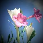 Texas Wild Flowers