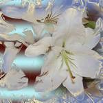 Lily -abstract - Shirree's Ice Queen