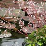 Lily Pond, Different Viewpoint
