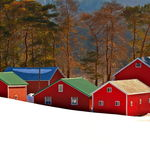 Little Red Barns