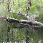 Log reflection