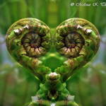 Koru Love