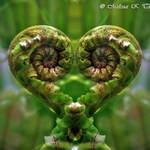 Koru Love