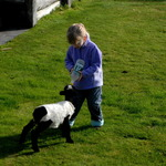 Lucys Orphan Lamb