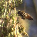 Macro Bee 2.0