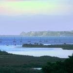Mangroves and Boats