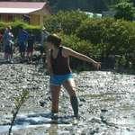 mangroves mud