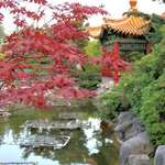 Maple Leaves & Pagoda