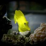 Yellow Babe