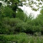 Putnam Marsh