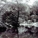 Maymont Park - Japanese Garden II