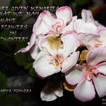 Night Flowers/We Are Given Memories - -  (January&#39;s Flowers)