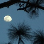 Moon Over Ocklawaha