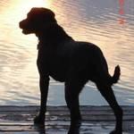 Mojo At Sunset