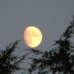 Moon over junipers