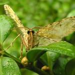 Curious Moth