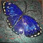 Moth mosaic