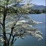 Mountain Lake in Spring