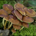 Mushroom Cluster