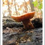 Fungi among I