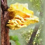 Vivid Fungus