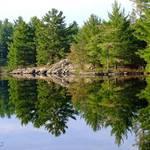 Muskoka Reflections
