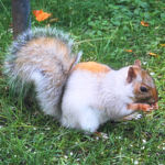 Mutant White Squirrel