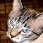 My Blue Eyed Girl