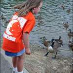 Feeding the Waterfowl