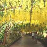 Laburnham Arch