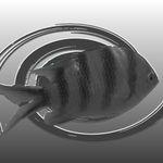 negative fish