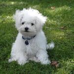 New Puppy #3