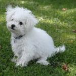 New Puppy #4