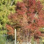 New Season Colours