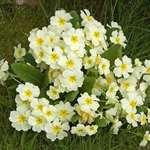 Spring Flowers ..