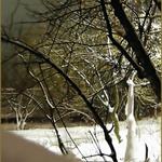 Dance of winter night