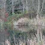 November Marshlands