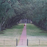 Oak Alley 