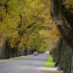 Oak Avenue 2
