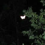 Unexplainable Butterfly