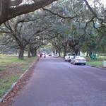 Avenue of Oaks City Park Style