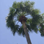 Palm from below