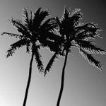 Two Palms 1