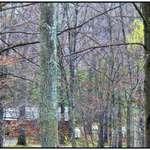 Watkins Glen KOA Woods View