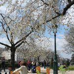 Paris at spring