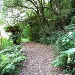 Fern Walkway