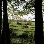 Early Morning from Elkin Wood