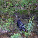 Patches in the Swamp2