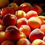 Peach bounty