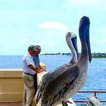 2 Pelicans 2 Men